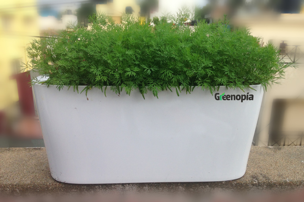 Greenopia_Growing DIL